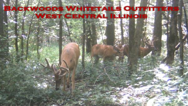 Illinois whitetail guides