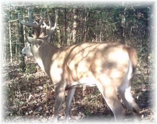 Illinois Firearm Hunting - Whitetail Deer Guides