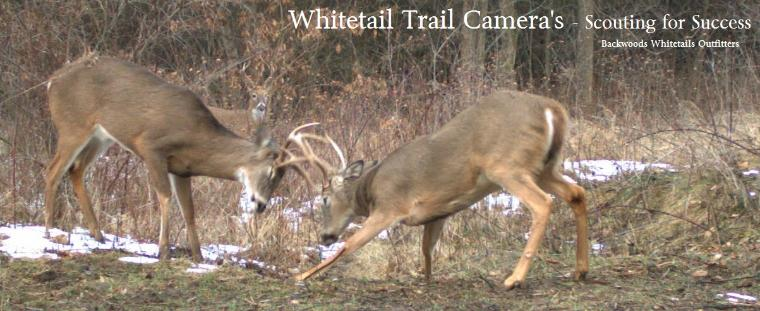Whitetail Scouting Cameras - How Many Do I Need?